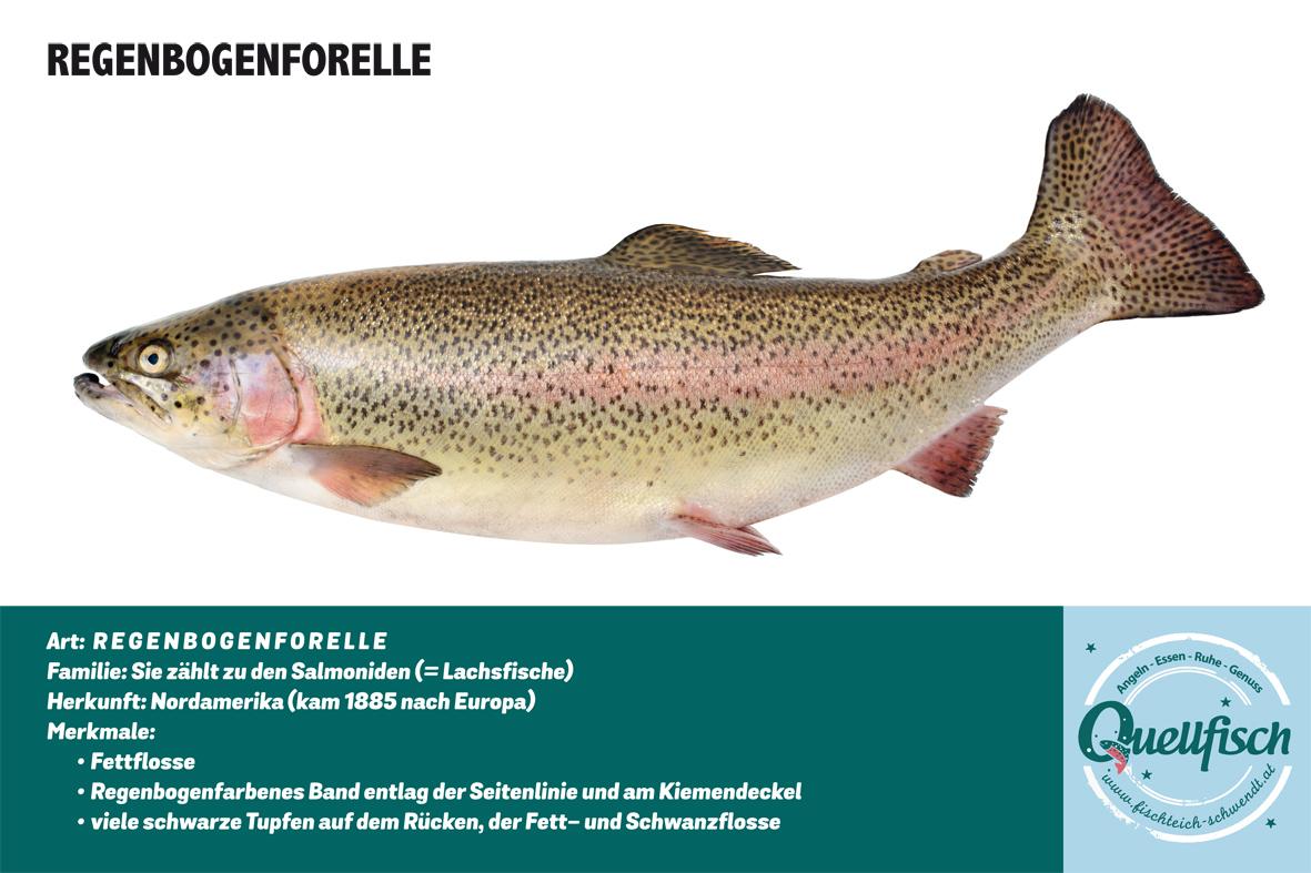 Fischen quellfisch resort schwendt for Welche fische im teich
