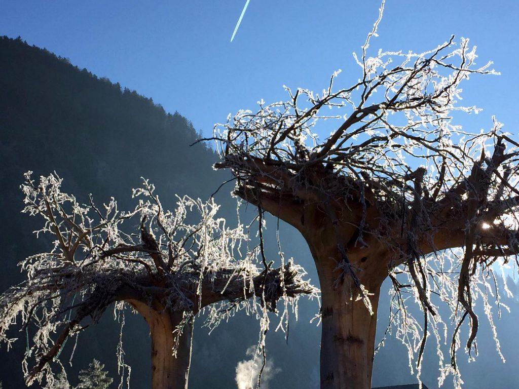 störe in forellenteich winter
